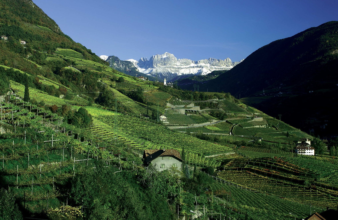The Wines of Alto Adige
